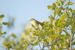 5 birds to spot this spring
